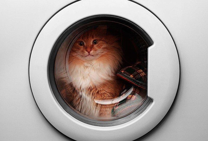 Кот пережил 40-минутную стирку встиральной машине
