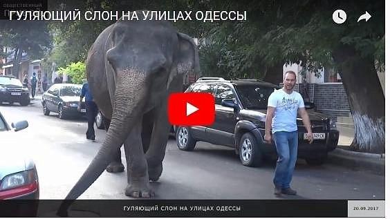 Экзотическое животное разгуливало по улицам Одессы (видео, фото)
