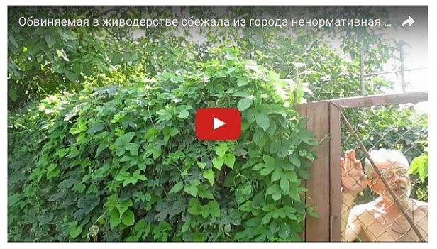 Женщина, повесившая собаку на дереве, сбежала из Одессы
