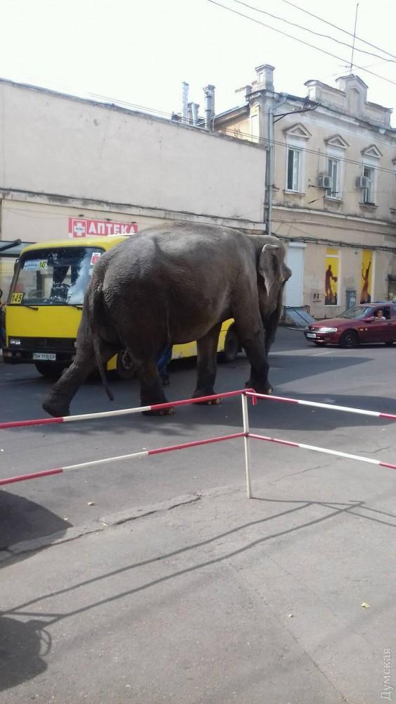 слон 2.jpg