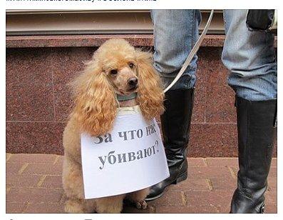 В Киеве жители заявили о задержании убийцы котов и собак, сеть в ярости