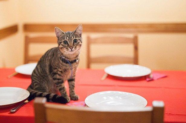 Лакомства для котов: что полезно, а чего давать не стоит?