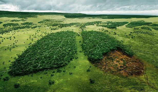 Запрос общества на решение экологических проблем просто используется в интересах политиков, Бортник