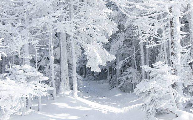 Ударят серьезные морозы: синоптик рассказала, когда Украину заметет снегом