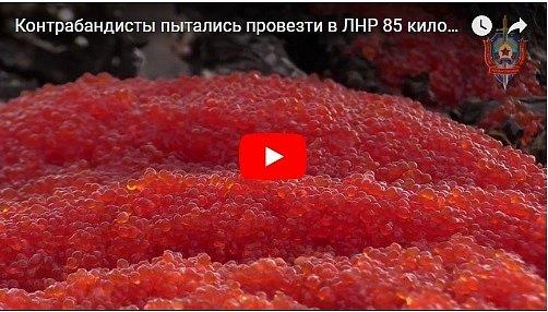 """По-богатому: в """"ЛНР"""" бульдозером раздавили 85 кг красной икры"""