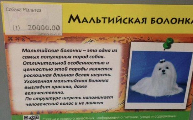 В Запорожье за 20 тысяч купили погибающую собаку (фото)