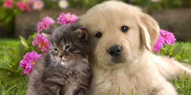 В Украине хотят ввести налог на котов и собак: стали известны подробности