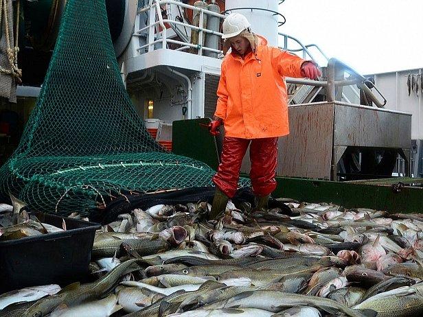 В Украине с 1 ноября действует ограничение на вылов рыбы