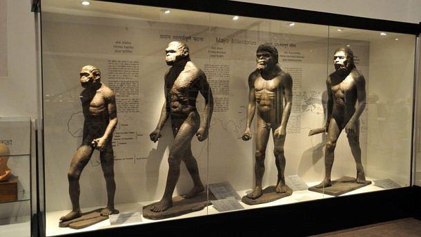 Опровергнута гипотеза об эволюции человека