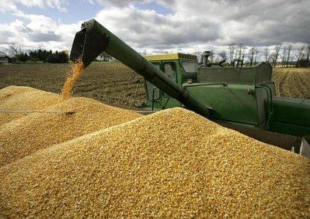 Цены на зерно в Украине ожидаются стабильными