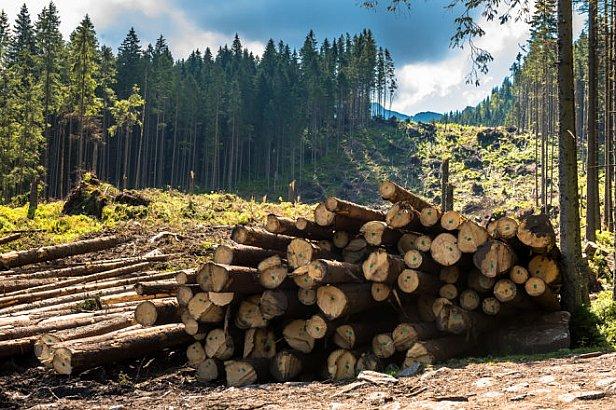 Фото: Вырубка леса