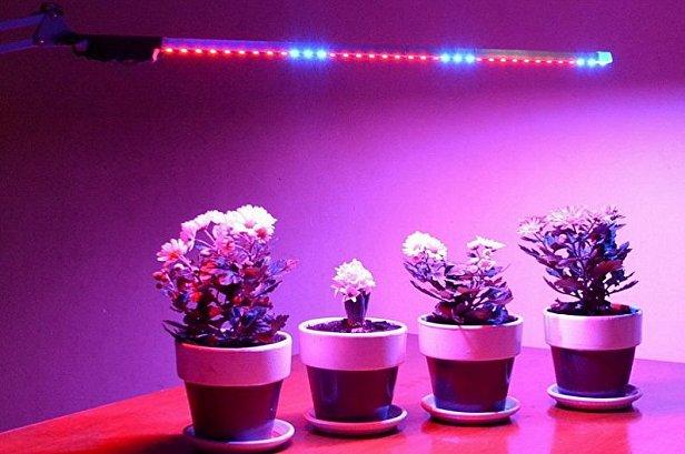Освещение в теплице фитолампами для роста растений
