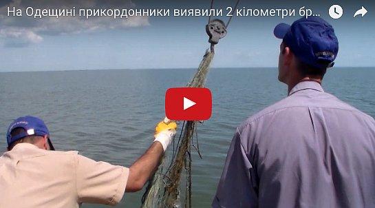 На Одесщине пограничники нашли мертвых дельфинов (видео)