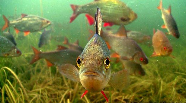 В Украине с 1 апреля вводится запрет на вылов рыбы