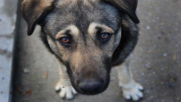 фото - собака