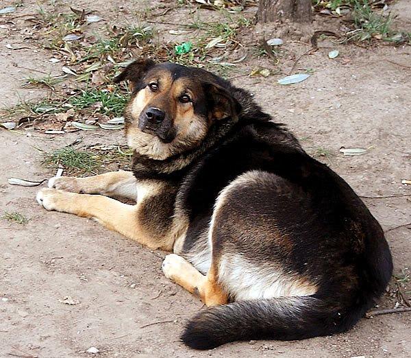 В России собака пришла с прогулки с головой соседа