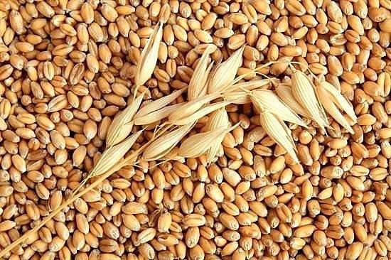 Котировки пшеницы снизились в США и Европе за первую декаду января
