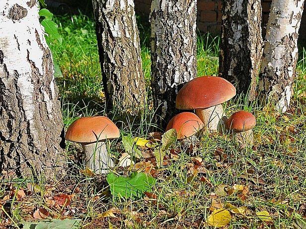 На Харьковщине несколько человек получили отравление грибами