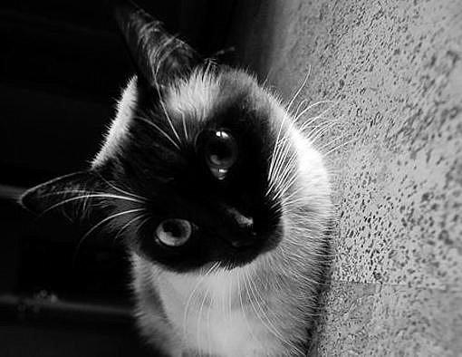 Украина занимает второе место в рейтинге любви к котам