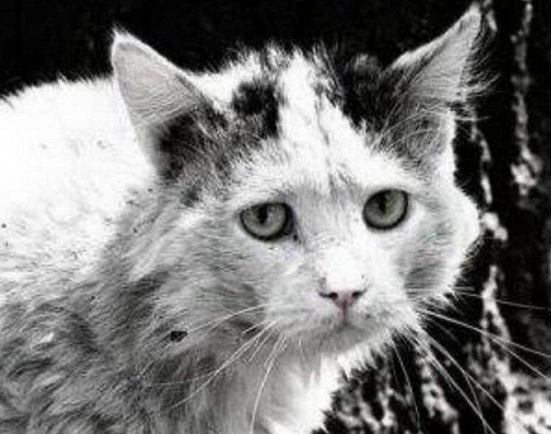 фото - штраф за выброшенное животное