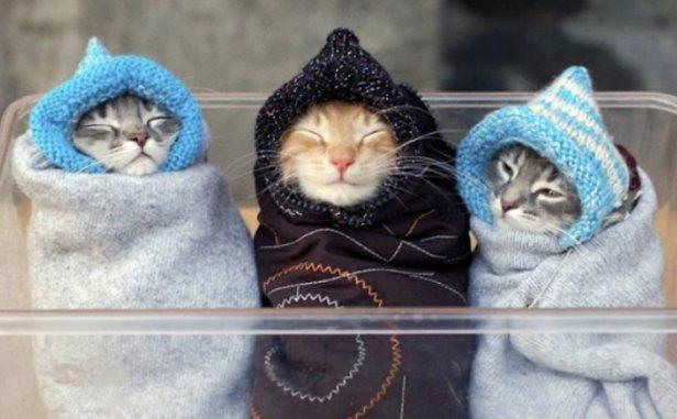 Прогноз погоды: синоптик рассказал, когда в Украину придет мороз