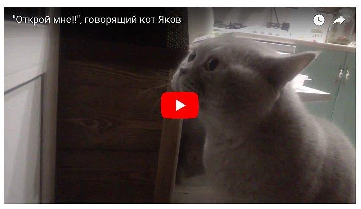 Кот так хотел выйти, что закричал человеческим голосом «Открой мне»! (видео)