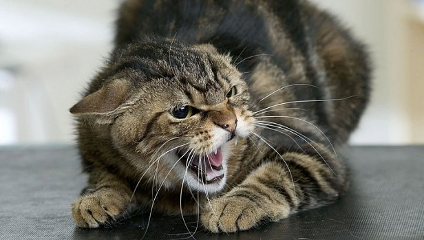 В Кропивницком бешеный кот покусал людей: врач дал важные рекомендации