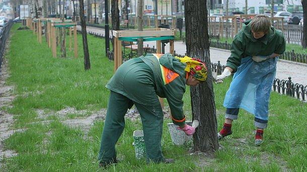 Киевским коммунальщикам  запретили белить бордюры и деревья