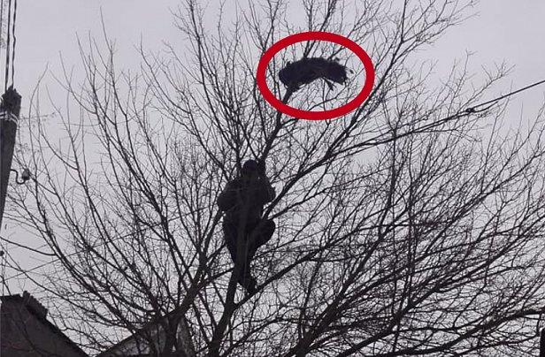 В Ирпене спасли замерзающего на дереве павлина