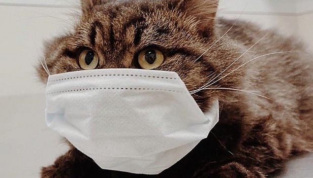 Кошки начали заражаться новым коронавирусом